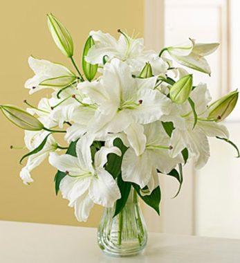 лилии букет белые фото