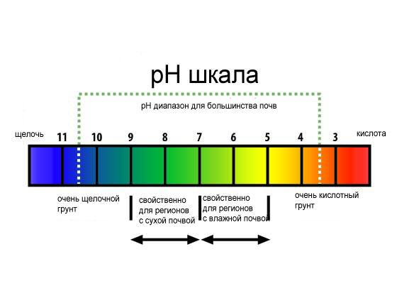 Как определить кислотность слюны в домашних условиях
