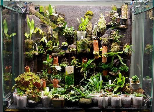 витрина для орхидей