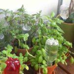 полив растений самотеком из пластиковой бутыли