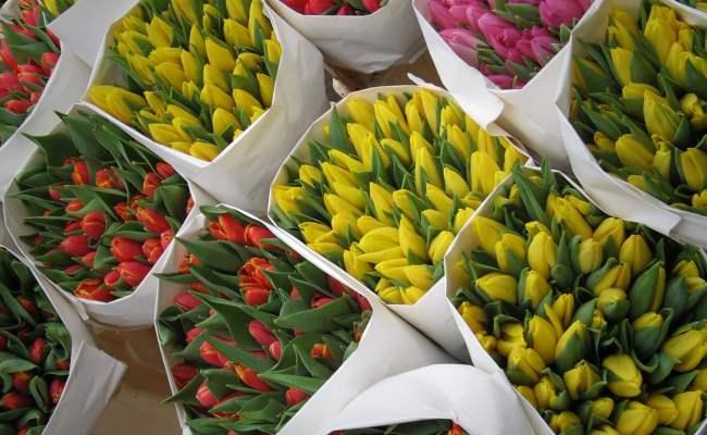 упакованные тюльпаны на 8 марта