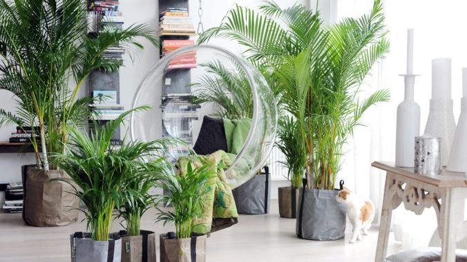 Равномерное освещение пальмы ареки
