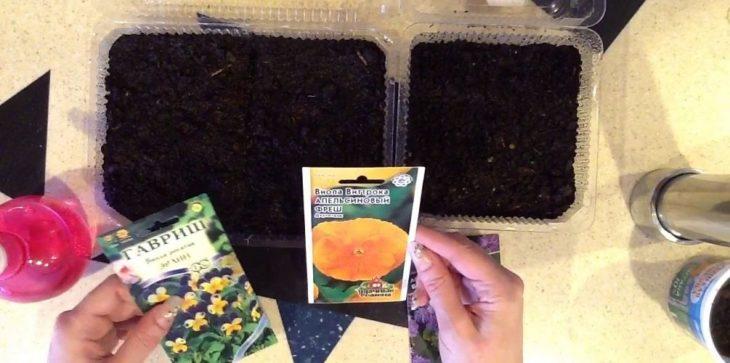 Выращивание однолетней фиалки Виттрока