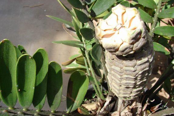 Освещение для замии