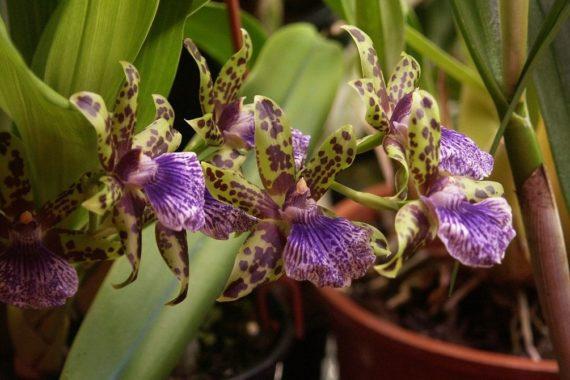 Уход в домашних условиях за орхидеями
