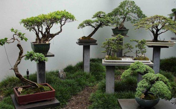 Емкости для выращивания бонсая