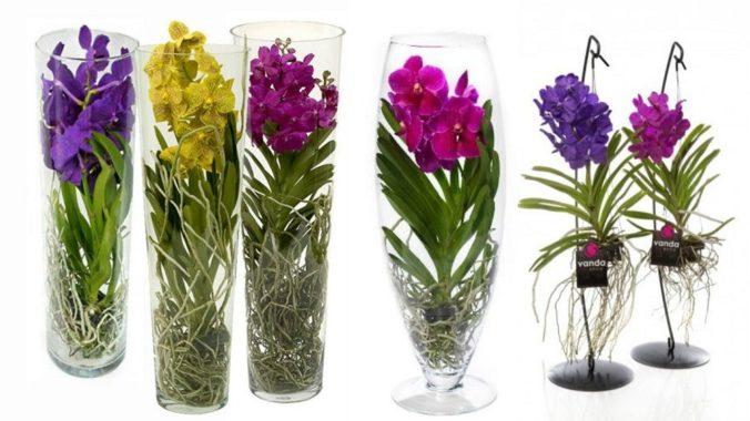 Выращивание орхидей на срезку