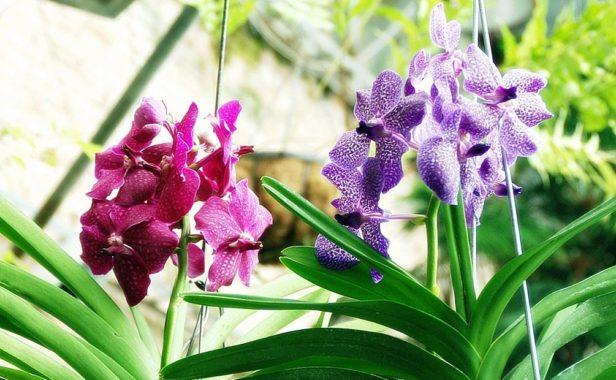 Освещение для орхидеи Ванда