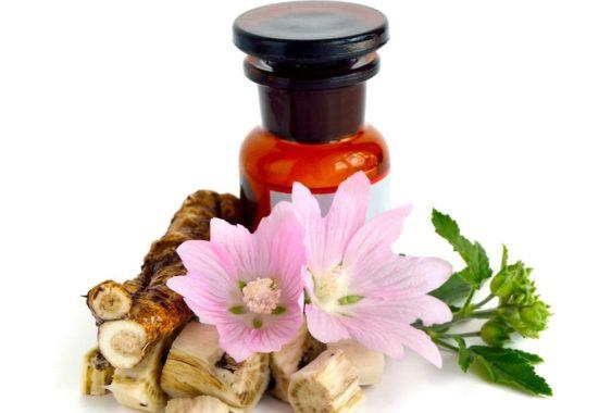 Лекарственные свойства алтея
