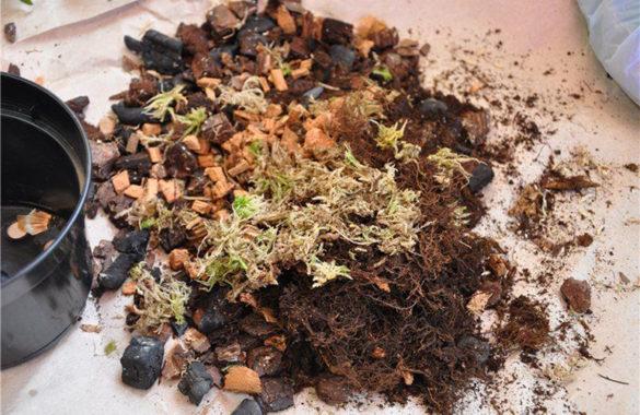 Почва для фрагмипедиума