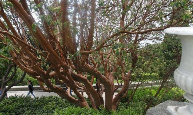 Условия для домашнего и садового разведения земляничника