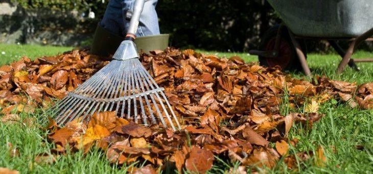 Как ухаживать за газоном осенью