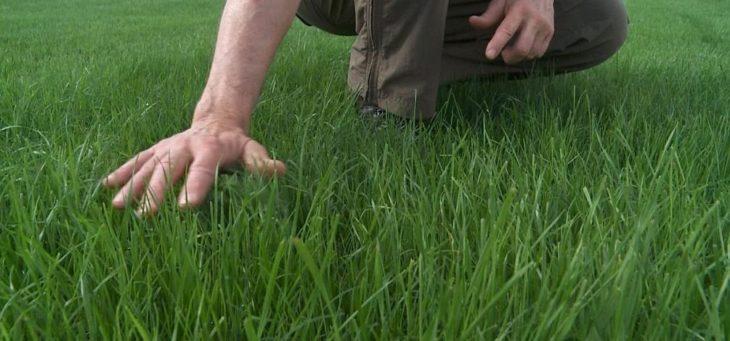 Как подкармливать газон
