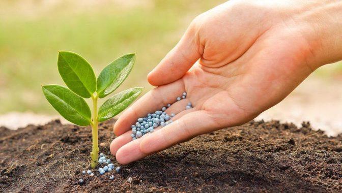 Подкормка растений удобрением